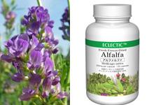 アルファルファ(ムラサキウマゴヤシ)Alfalfa